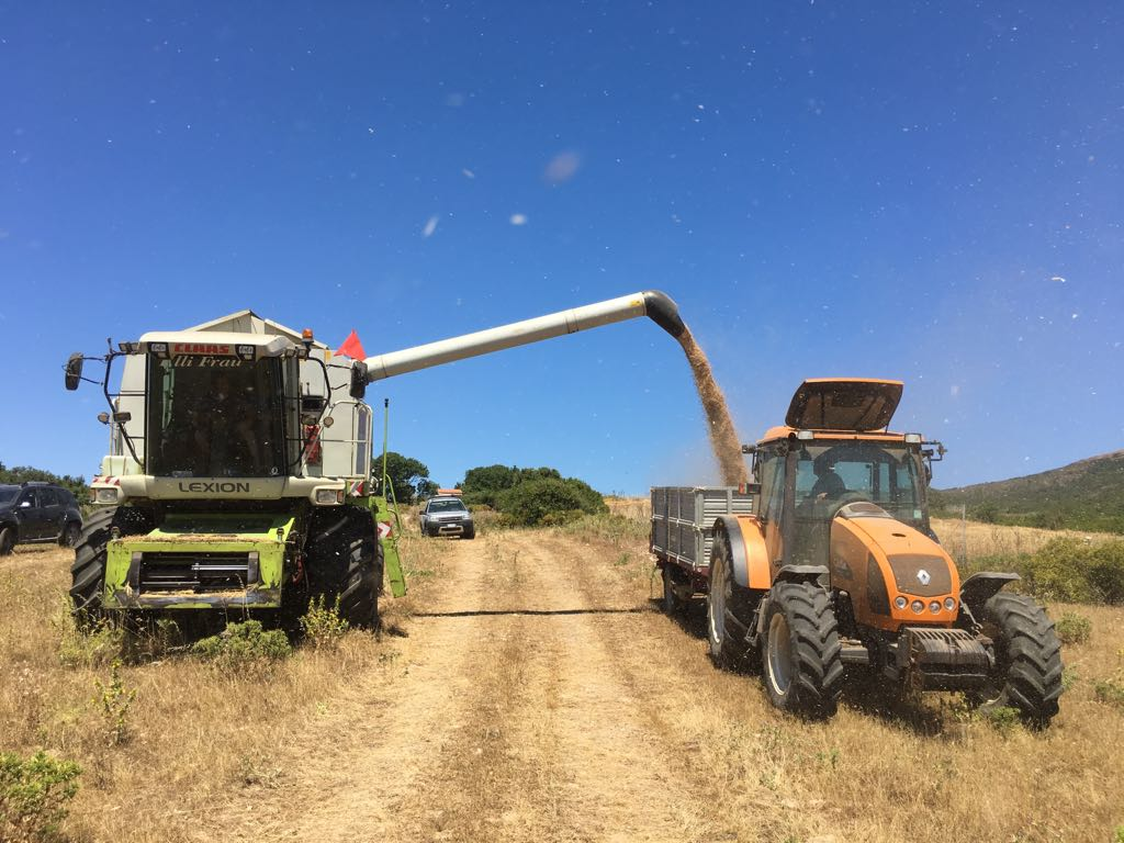 fattoria trattore